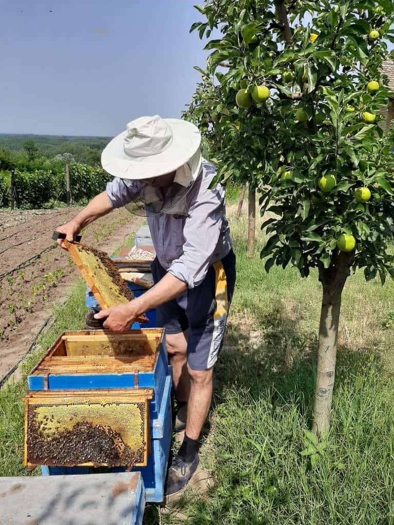 Gabriel Ghitoiu apicultor